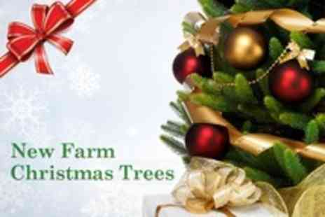 New Farm Christmas Trees - Potted Christmas Tree Plus Festive Drinks, Mince Pies and Chocolates - Save 25%