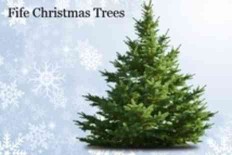 Fife Christmas Trees - Real Pine Christmas Trees - Save 51%