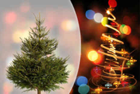 Adventure Golf Island - Real 6, 7ft Christmas tree from Fife Christmas Trees - Save 51%