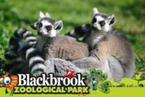 Blackbrook Zoological Park - Childrens Animal Experience - Save 65%