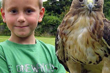 Talon Falconry - Hour Long Hawk Walk or Owl Experience - Save 51%