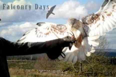 Falconry Days - Four Hour Falconry Experience - Save 61%