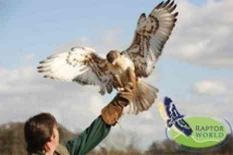 Raptor World - Two Hour Bird of Prey Experience With Handling and Flying For One - Save 61%