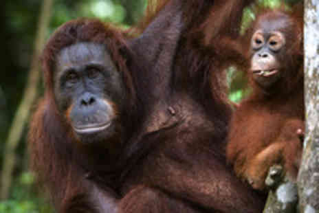 The Great Projects - Two week all inclusive Orangutan volunteer experience  - Save 35%