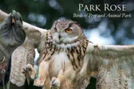 Park Rose Birds of Prey - Half Day Hands On Falconry Experience For One - Save 63%