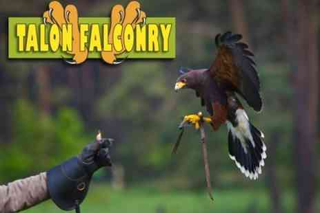 Talon Falconry - One Hour Hawk Walking Experience - Save 60%