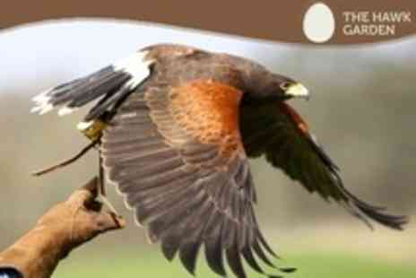 The Hawk Garden - Hawk Walk or Falconry Experience For One People - Save 67%