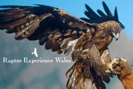 Raptor Experience Wales - Two Hour Falconry Experience - Save 62%