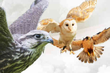 Cheshire Falconry - Falconry Session  - Save 56%