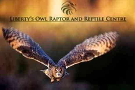 Libertys Owl Raptor and Reptile Centre - Two Hour Bird flying experience For One - Save 73%