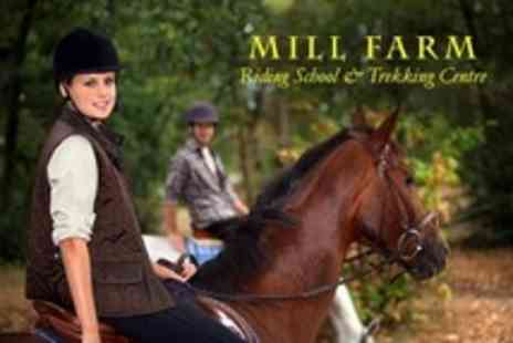 Mill Farm Riding School - One Hour Horse Riding Private Lesson For One - Save 51%