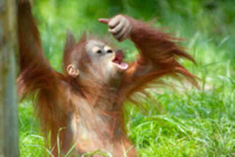 The Great Projects - Two wk all inclusive Borneo orangutan tribe & rainforest experience - Save 36%