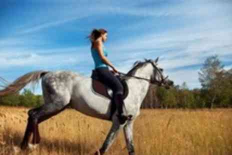 West Bridgford Equestrian Centre - 1 hour group riding lesson - Save 60%