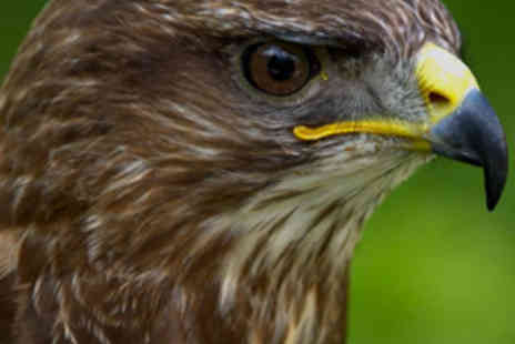 Fallowfields Falconry - TwoHour Introduction to Falconry - Save 80%