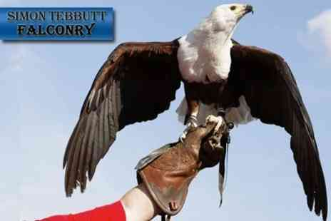 Simon Tebbutt Falconry - Two Hour Falconry Experience - Save 70%