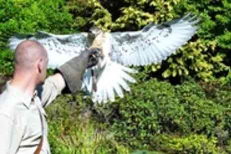 Pro Falconer - Half Day Birds of Prey Experience - Save 71%