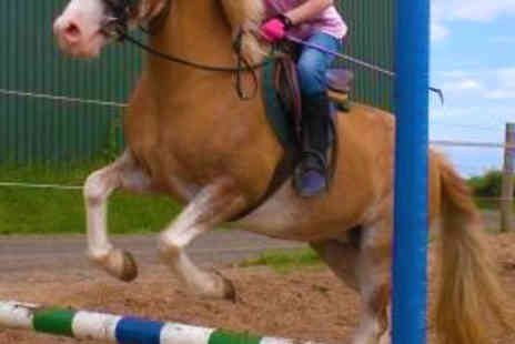 Laurelview Equestrian Centre - 45 Minute Horse Riding Lesson - Save 50%