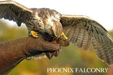 Phoenix Falconry - Half Day Falconry Experience for £29 - Save 61%