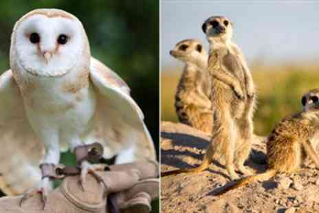 Park Rose Birds of Prey - Half Day Falconry & Meerkat Experience - Save 67%