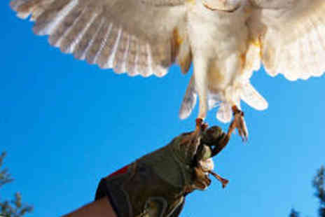 The English School of Falconry - Half Day Bird Handling Experience - Save 55%