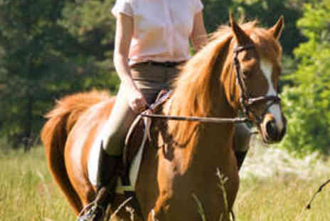 The Talland School of Equitation - Hour-Long Group Horse Riding Lesson - Save 75%