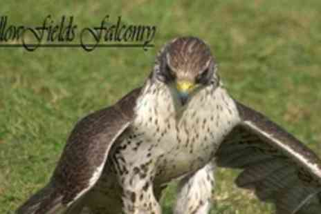 Fallowfields Falconry - Two Hour Bird of Prey Falconry Experience - Save 80%