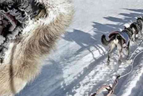Voyage Active - Three Day Dog Sledding Experience With Meals, Accommodation and Transfers - Save 60%