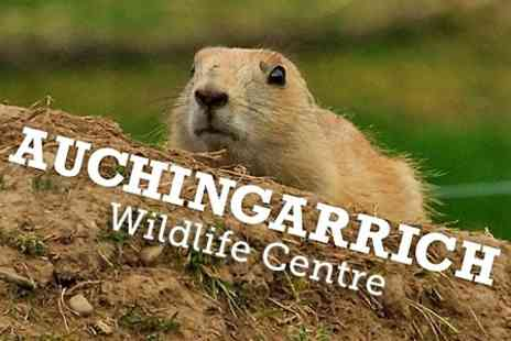 Auchingarrich Wildlife Centre - Entry For Family of Four - Save 50%