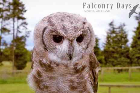 Falconry Days - Two Hours Owl Handling and Flying - Save 54%