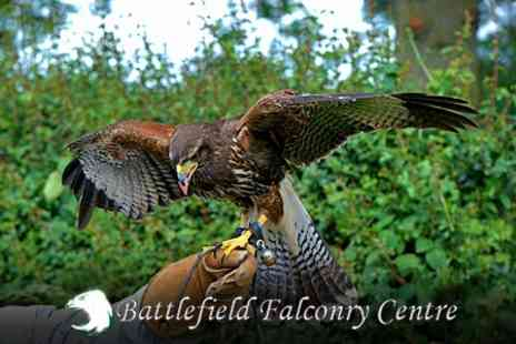 Battlefield Falconry Centre - Birds of Prey Two Hour Experience For One - Save 73%