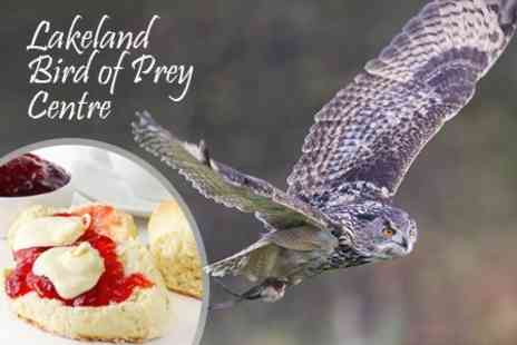 Lakeland Bird of Prey Centre - Entry, Flight Show and Cream Tea For Two - Save 37%