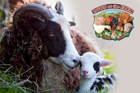 Down at the Farm - Seasonal Pass For Two or Family - Save 67%