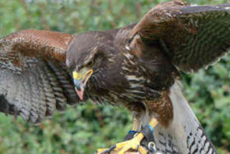 Battlefield Falconry Centre - Two Hour Bird of Prey Handling Experience - Save 73%
