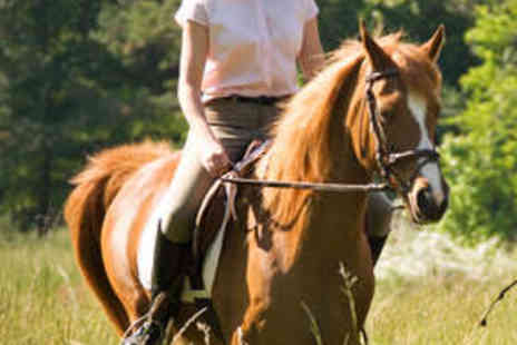 The Talland School - Family of Four Horse Riding Day with Lunch - Save 71%