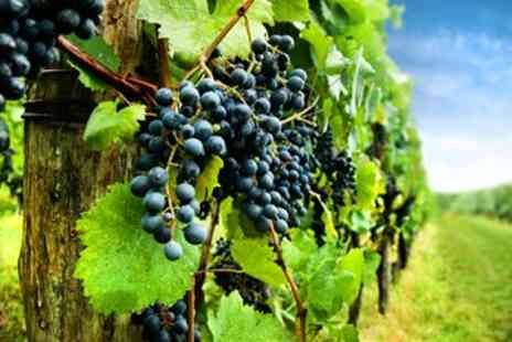 Carr Taylor Vineyard - Award Winning Vineyard Tour for 2 with Lunch  - Save 63%