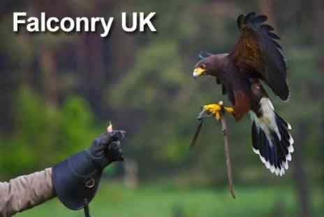Falconry UK Thirsk Birds of Prey Centre - Family Day Ticket With Access to Flying Displays - Save 68%