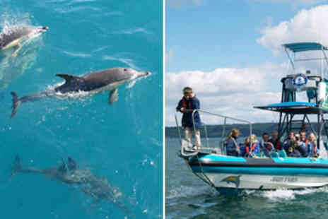 Orca Sea Safaris - Dolphin & Whale Watching Spring Boat Trip - Save 42%