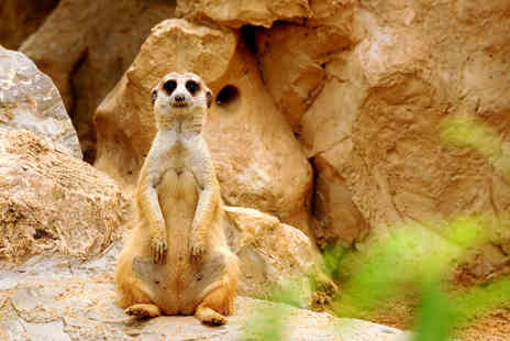 Park Rose Bird of Prey - Meerkat experience for 1 Person - Save 83%