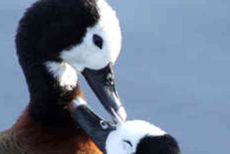 WWT London Wetland Centre - Two Adult Tickets - Save 62%