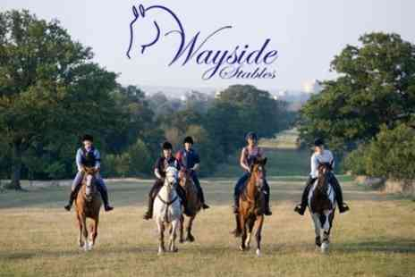 Wayside Stables - Horse Riding Two Hour Hack Through Windsor Great Park  - Save 53%