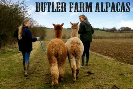 Butlers Farm Alpacas - Alpaca Experience For One - Save 50%