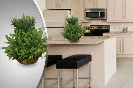 Flowers & Plants Direct - Kitchen herb garden including rosemary, oregano & sage - Save 57%