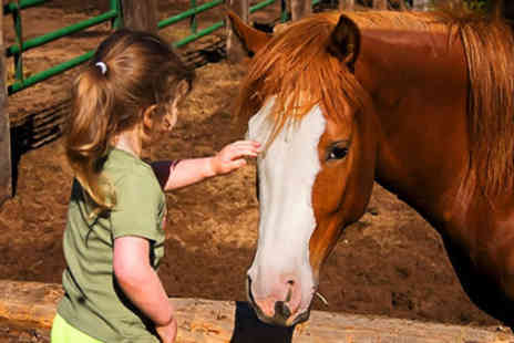 HorseWorld - £9 for family entry to the award-winning Horse World in Whitchurch - Save 60%