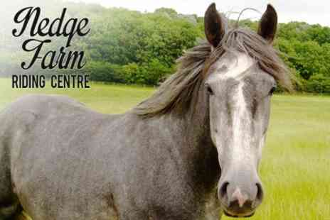 Nedge Farm Riding Centre - One Hour Horse Riding Lesson - Save 52%
