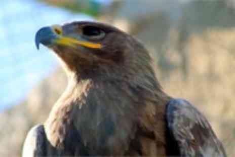 Stockley Birds of Prey - VIP Falconry Experience plus 2 Tickets to Stockley Farm - Save 58%