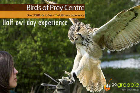 The English School of Falconry - Half Day Owl Experience - Save 77%