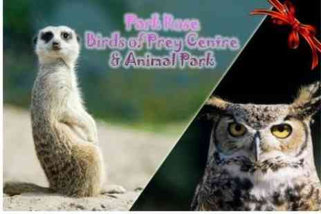 Park Rose Birds of Prey - Meet the Meerkats Experience For One - Save 83%