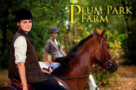 Plum Park Farm - Horse Riding Lesson and 60 Minute Countryside Hack For One - Save 56%