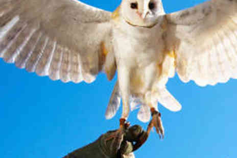 The English School of Falconry - Half Day Bird Handling Experience - Save 77%