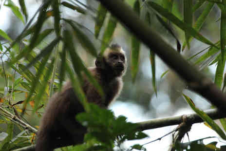Crees - 2 Week wildlife project in the Amazon - Save 26%